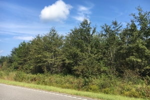 Worley Farm Lot 2 - Horry County SC