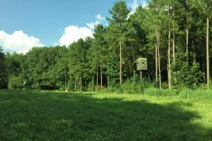 Fort Deposit Hunting and Timber Investment - Lowndes County AL