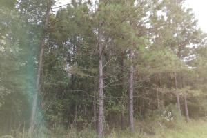 Prattville Timber & Recreation Investment - Autauga County AL