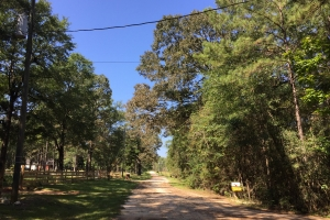Wilmer Southern Pines Whitetail Lane Tract - Mobile County AL