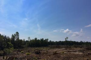 Pageland Hunting Land In Chesterfield Sc 8 Of 10
