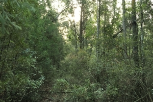 Poll Bayou Timber Tract in Washington, AL (14 of 14)