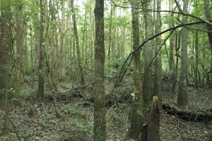 Poll Bayou Timber Tract in Washington, AL (4 of 14)