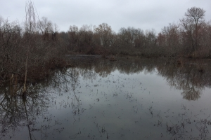 80+/- Acre Duck Hunting Farm near Cache River in Woodruff, AR (4 of 33)