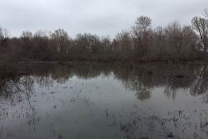 80+/- Acre Duck Hunting Farm near Cache River in Woodruff, AR (5 of 33)