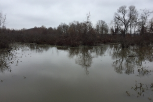 80+/- Acre Duck Hunting Farm near Cache River in Woodruff, AR (7 of 33)