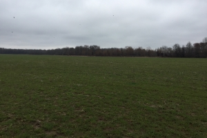 80+/- Acre Duck Hunting Farm near Cache River in Woodruff, AR (32 of 33)