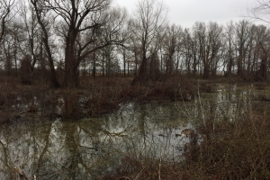 80+/- Acre Duck Hunting Farm near Cache River in Woodruff, AR (8 of 33)