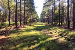 Bamberg Hunting and Timber Land - Bamberg County SC
