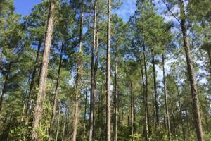 Magnolia Swamp Tract in Lowndes, AL (6 of 16)