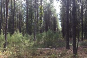 Magnolia Swamp Tract in Lowndes, AL (7 of 16)