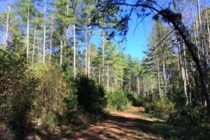 Lake James Hunting and Timber Tract