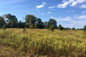 Ellaville Investment Tract