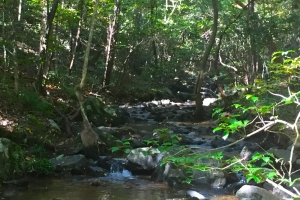 Westville Hunting Tract with Stream - Kershaw County SC
