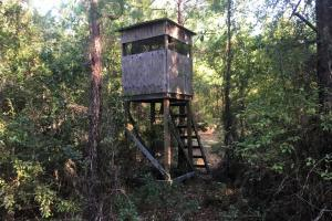 Hickory Hill Hunting & Timber Tract - Hampton County SC