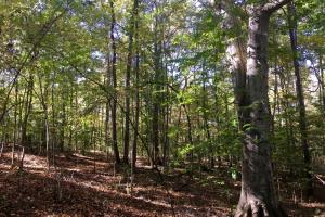 Sharon Hunting Homesite  - York County SC