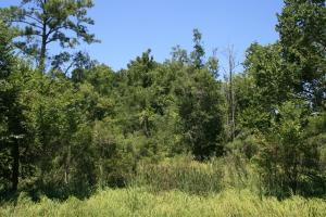 Pungo River Hunting and Timber Tract - Beaufort County NC