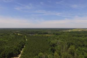 Aulander Timber and Hunting Tract - Bertie County NC