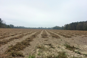 Fairfax Farm - Allendale County SC