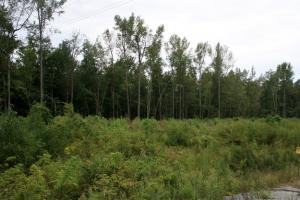 Windsor Hunting and Timber Homesite in Bertie, NC (2 of 4)