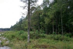 Windsor Hunting and Timber Homesite in Bertie, NC (4 of 4)