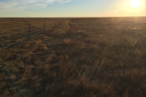 Income Producing Property - Eastern CO CRP - Cheyenne County CO