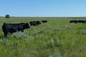 Eastern Colorado Ranch For Sale - Kit Carson County CO