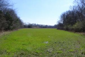 Freetown Creek Timber & Hunting Investment - Perry County AL