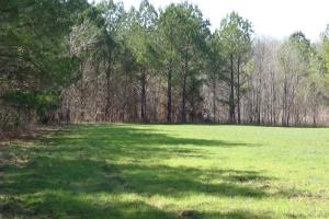 Freetown Creek Timber, Hunting, & Farming in Perry, AL (11 of 27)