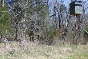 Freetown Creek Timber, Hunting, & Farming in Perry, AL (19 of 27)