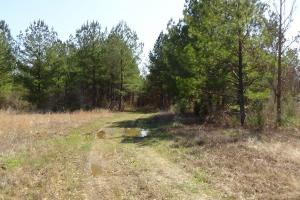 Freetown Creek Timber, Hunting, & Farming in Perry, AL (22 of 27)