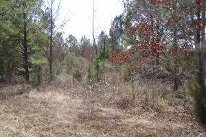 Freetown Creek Timber, Hunting, & Farming in Perry, AL (27 of 27)