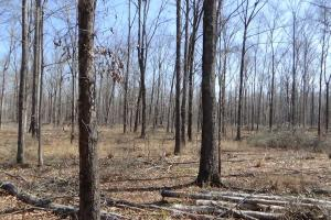 Freetown Creek Timber, Hunting, & Farming in Perry, AL (5 of 27)