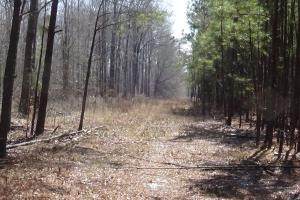 Freetown Creek Timber, Hunting, & Farming in Perry, AL (7 of 27)