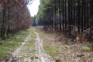 Freetown Creek Timber, Hunting, & Farming in Perry, AL (10 of 27)