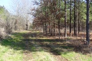 Freetown Creek Timber, Hunting, & Farming in Perry, AL (8 of 27)