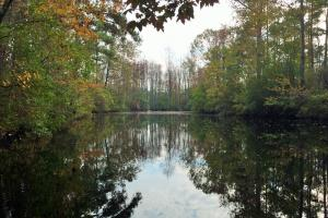 Camden Farm and Hunting Land - Kershaw County SC