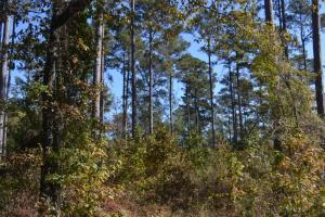 39+/- Acre Natural Re-Growth Timberland and Hunting Land (Haskew Tract 4) - Drew County AR