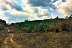 HWY 278 Rural Homesites - Calhoun County AL