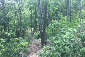 155.7+/- Acres Timberland & Hunting Land in Hardin, TN (10 of 10)