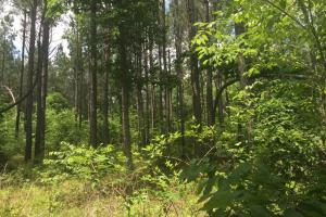 155.7+/- Acres Timberland & Hunting Land in Hardin, TN (1 of 10)