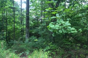 155.7+/- Acres Timberland & Hunting Land in Hardin, TN (5 of 10)