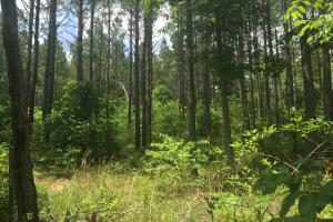 155.7+/- Acres Timberland & Hunting Land in Hardin, TN (2 of 10)