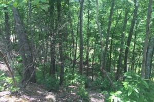 155.7+/- Acres Timberland & Hunting Land in Hardin, TN (7 of 10)