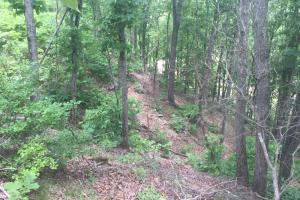 155.7+/- Acres Timberland & Hunting Land in Hardin, TN (8 of 10)
