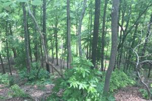 155.7+/- Acres Timberland & Hunting Land in Hardin, TN (9 of 10)