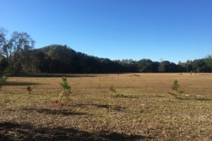 Early Branch Pasture/Recreational Tract - Hampton County SC