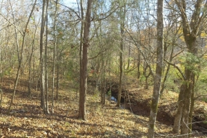 Hwy 71 Timber Investment and Recreational Land - Abbeville County SC