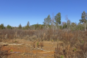 Hwy 71 Timber Investment and Recreational Land in Abbeville, SC (4 of 7)