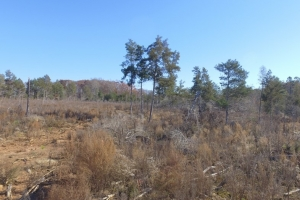 Hwy 71 Timber Investment and Recreational Land in Abbeville, SC (6 of 7)
